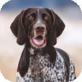 猎犬模拟器